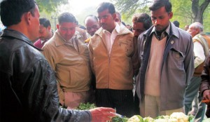 Organization-of-Agro-Fair-Shikohabad