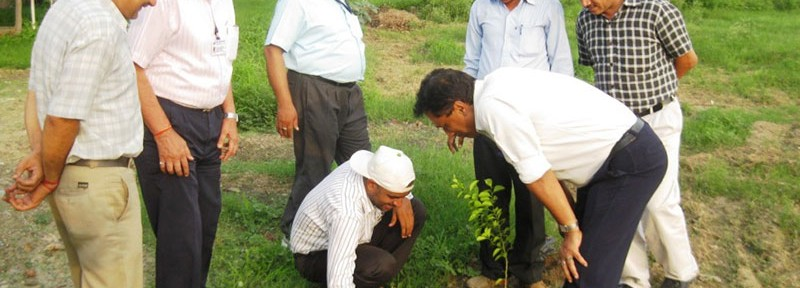 Staff from Hind Lamps dig the soil for tree plantation